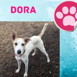 Dora – Pandora