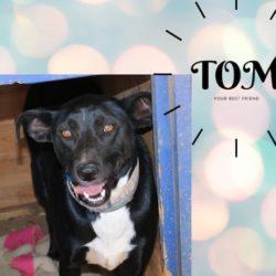 Tom – Tommy