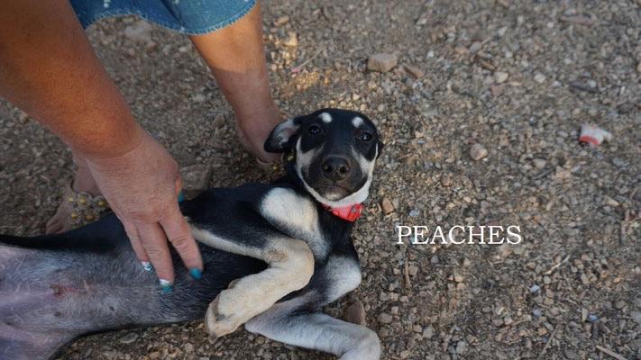 Hera (Peaches)